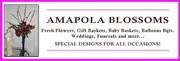 Amapola Blossoms